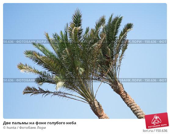 Купить «Две пальмы на фоне голубого неба», фото № 150636, снято 14 сентября 2007 г. (c) hunta / Фотобанк Лори
