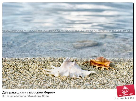 Две ракушки на морском берегу, фото № 243752, снято 16 марта 2008 г. (c) Татьяна Белова / Фотобанк Лори