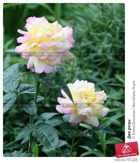 Две розы, фото № 57228, снято 26 июня 2007 г. (c) Елена Блохина / Фотобанк Лори
