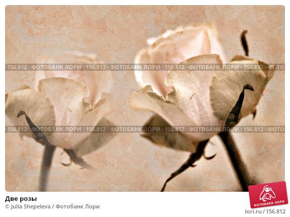 Две розы, фото № 156812, снято 4 декабря 2007 г. (c) Julia Shepeleva / Фотобанк Лори
