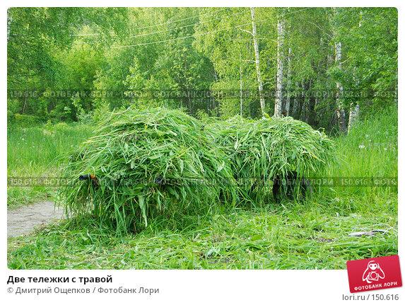 Купить «Две тележки с травой», фото № 150616, снято 8 июня 2007 г. (c) Дмитрий Ощепков / Фотобанк Лори