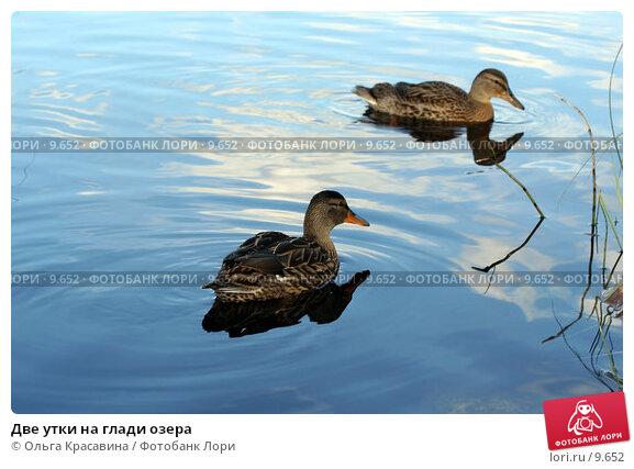 Две утки на глади озера, фото № 9652, снято 31 июля 2006 г. (c) Ольга Красавина / Фотобанк Лори