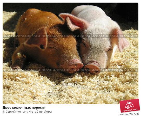Двое молочных поросят, фото № 92560, снято 3 июня 2007 г. (c) Сергей Костин / Фотобанк Лори