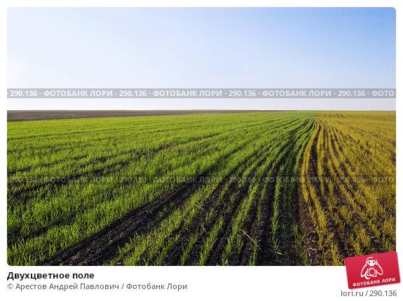 Двухцветное поле, фото № 290136, снято 12 апреля 2008 г. (c) Арестов Андрей Павлович / Фотобанк Лори