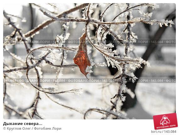Дыхание севера..., фото № 143084, снято 5 декабря 2007 г. (c) Круглов Олег / Фотобанк Лори