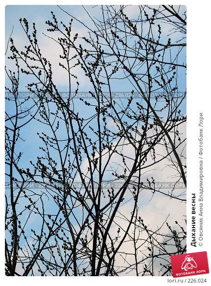 Дыхание весны, фото № 226024, снято 15 марта 2008 г. (c) Овсяник Анна Владимировна / Фотобанк Лори