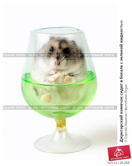 Джунгарский хомячок сидит в бокале с зеленой жидкостью, фото № 28268, снято 18 марта 2007 г. (c) Сергей Лешков / Фотобанк Лори
