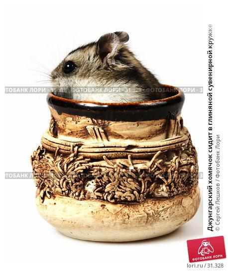 Джунгарский хомячок сидит в глиняной сувенирной кружке, фото № 31328, снято 18 марта 2007 г. (c) Сергей Лешков / Фотобанк Лори