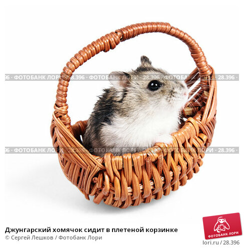 Джунгарский хомячок сидит в плетеной корзинке, фото № 28396, снято 18 марта 2007 г. (c) Сергей Лешков / Фотобанк Лори