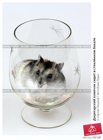 Джунгарский хомячок сидит в стеклянном бокале, фото № 38548, снято 18 марта 2007 г. (c) Сергей Лешков / Фотобанк Лори