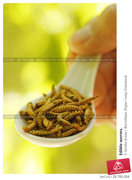 Купить «Edible worms.», фото № 28700504, снято 17 июня 2018 г. (c) easy Fotostock / Фотобанк Лори