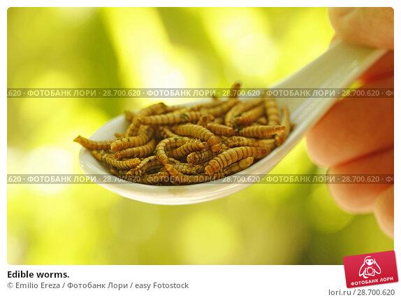 Купить «Edible worms.», фото № 28700620, снято 17 июня 2018 г. (c) easy Fotostock / Фотобанк Лори