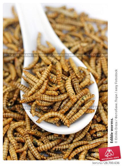 Купить «Edible worms.», фото № 28700636, снято 17 июня 2018 г. (c) easy Fotostock / Фотобанк Лори