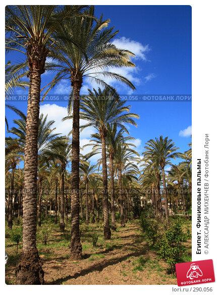 Египет. Финиковые пальмы, фото № 290056, снято 26 февраля 2008 г. (c) АЛЕКСАНДР МИХЕИЧЕВ / Фотобанк Лори