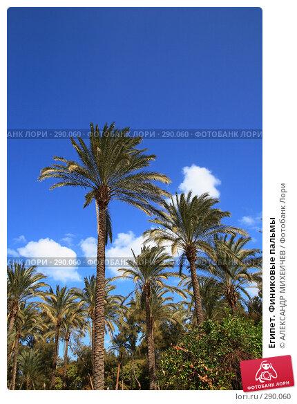 Египет. Финиковые пальмы, фото № 290060, снято 26 февраля 2008 г. (c) АЛЕКСАНДР МИХЕИЧЕВ / Фотобанк Лори