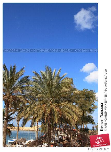 Египет. Пальмы, фото № 290052, снято 26 февраля 2008 г. (c) АЛЕКСАНДР МИХЕИЧЕВ / Фотобанк Лори