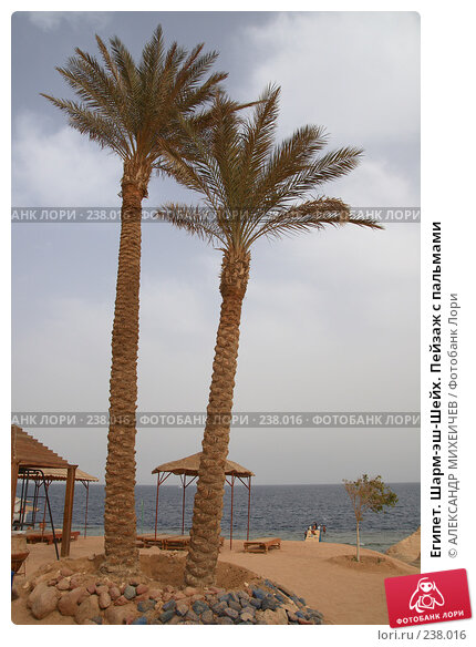 Египет. Шарм-эш-Шейх. Пейзаж с пальмами, фото № 238016, снято 24 февраля 2008 г. (c) АЛЕКСАНДР МИХЕИЧЕВ / Фотобанк Лори