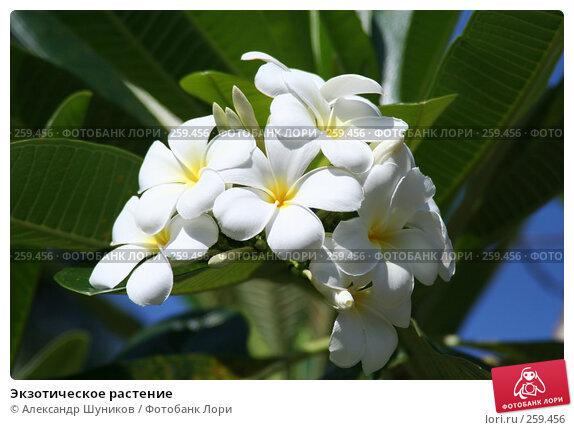 Экзотическое растение, фото № 259456, снято 2 марта 2006 г. (c) Александр Шуников / Фотобанк Лори