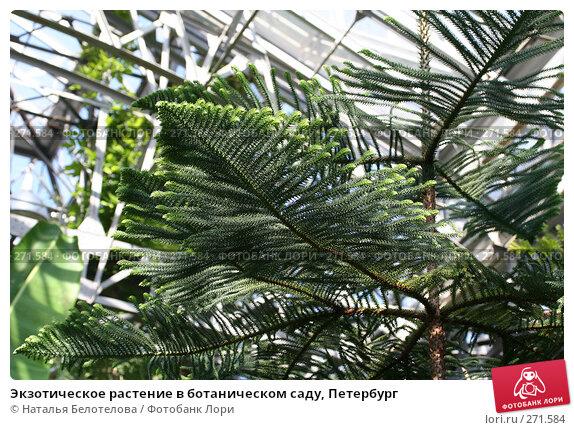 Экзотическое растение в ботаническом саду, Петербург, фото № 271584, снято 3 мая 2008 г. (c) Наталья Белотелова / Фотобанк Лори