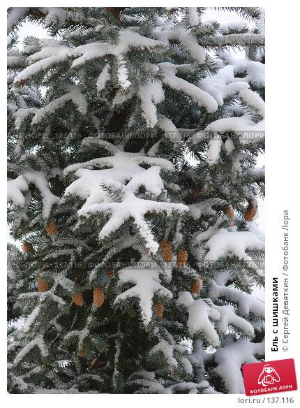 Ель с шишками, фото № 137116, снято 4 декабря 2007 г. (c) Сергей Девяткин / Фотобанк Лори