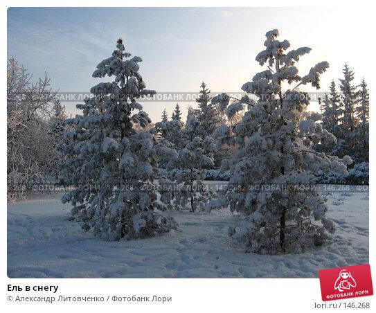Ель в снегу, фото № 146268, снято 10 декабря 2007 г. (c) Александр Литовченко / Фотобанк Лори
