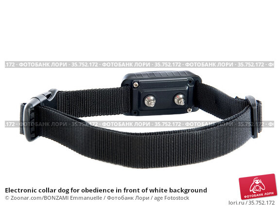 Electronic collar dog for obedience in front of white background. Стоковое фото, фотограф Zoonar.com/BONZAMI Emmanuelle / age Fotostock / Фотобанк Лори