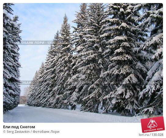 Ели под Снегом, фото № 130028, снято 17 декабря 2004 г. (c) Serg Zastavkin / Фотобанк Лори
