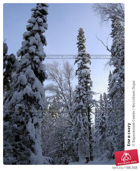 Купить «Ели в снегу», фото № 188568, снято 20 ноября 2005 г. (c) Барковский Семён / Фотобанк Лори