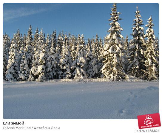 Купить «Ели зимой», фото № 188824, снято 27 января 2008 г. (c) Anna Marklund / Фотобанк Лори