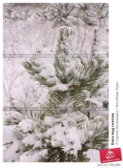 Купить «Елка под снегом», фото № 156900, снято 16 декабря 2007 г. (c) Сергей Литвиненко / Фотобанк Лори