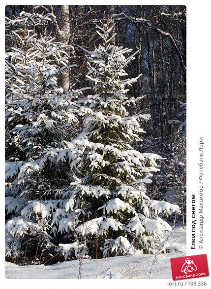 Елки под снегом, фото № 108336, снято 11 февраля 2007 г. (c) Александр Максимов / Фотобанк Лори