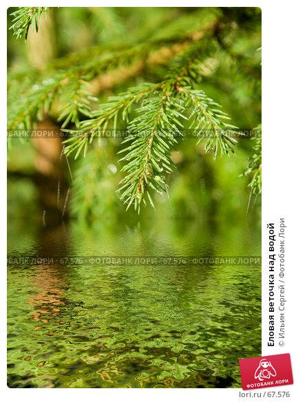 Еловая веточка над водой, фото № 67576, снято 13 августа 2006 г. (c) Ильин Сергей / Фотобанк Лори