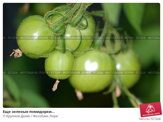 Еще зеленые помидорки..., фото № 57524, снято 30 мая 2007 г. (c) Крупнов Денис / Фотобанк Лори
