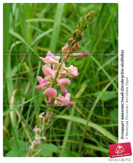 Эспарцет виколистный (Onobrychis viciifolia), фото № 26712, снято 10 июля 2004 г. (c) Вячеслав Потапов / Фотобанк Лори