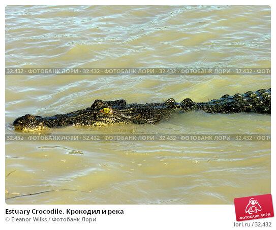 Estuary Crocodile. Крокодил и река, фото № 32432, снято 21 июня 2006 г. (c) Eleanor Wilks / Фотобанк Лори