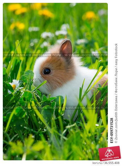 ESY-059731528. Стоковое фото, фотограф Zoonar.com/Judith Dzierzawa / easy Fotostock / Фотобанк Лори