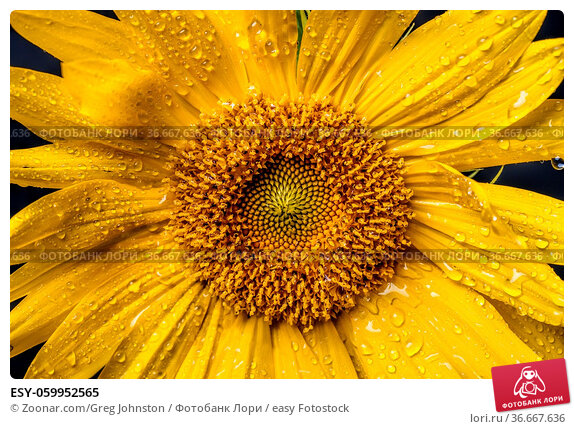ESY-059952565. Стоковое фото, фотограф Zoonar.com/Greg Johnston / easy Fotostock / Фотобанк Лори