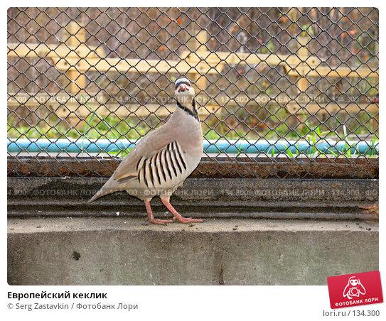 Купить «Европейский кеклик», фото № 134300, снято 10 октября 2004 г. (c) Serg Zastavkin / Фотобанк Лори