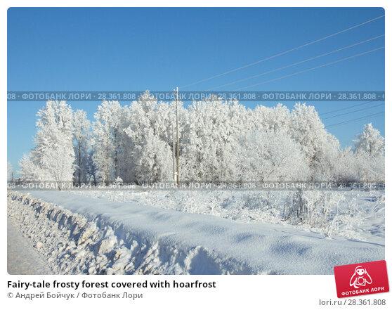 Купить «Fairy-tale frosty forest covered with hoarfrost», фото № 28361808, снято 16 января 2017 г. (c) Андрей Бойчук / Фотобанк Лори