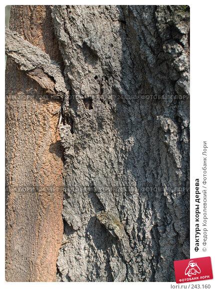 Купить «Фактура коры дерева», фото № 243160, снято 4 апреля 2008 г. (c) Федор Королевский / Фотобанк Лори