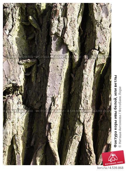 Купить «Фактура коры ивы белой, или ветлы», эксклюзивное фото № 4539868, снято 19 апреля 2013 г. (c) Ната Антонова / Фотобанк Лори
