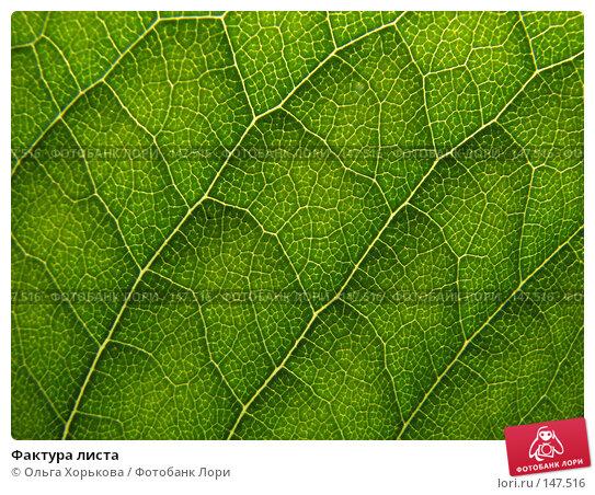Фактура листа, фото № 147516, снято 13 августа 2007 г. (c) Ольга Хорькова / Фотобанк Лори