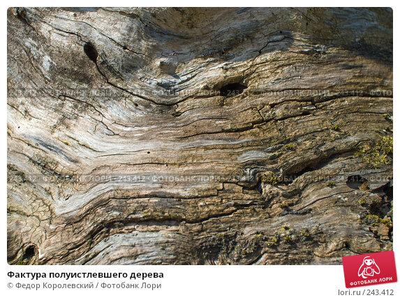 Фактура полуистлевшего дерева, фото № 243412, снято 4 апреля 2008 г. (c) Федор Королевский / Фотобанк Лори