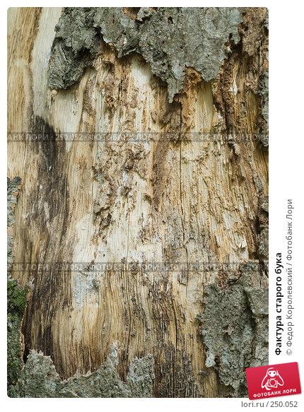 Купить «Фактура старого бука», фото № 250052, снято 12 апреля 2008 г. (c) Федор Королевский / Фотобанк Лори