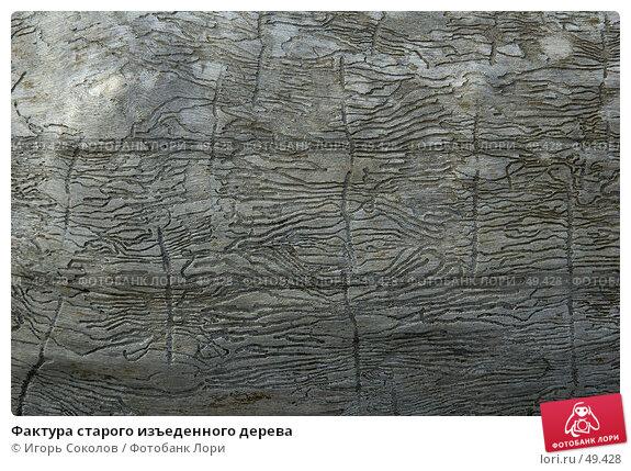 Фактура старого изъеденного дерева, фото № 49428, снято 4 декабря 2016 г. (c) Игорь Соколов / Фотобанк Лори