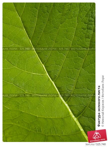 Фактура зеленого листа, фото № 325740, снято 14 июня 2008 г. (c) Николай Коржов / Фотобанк Лори