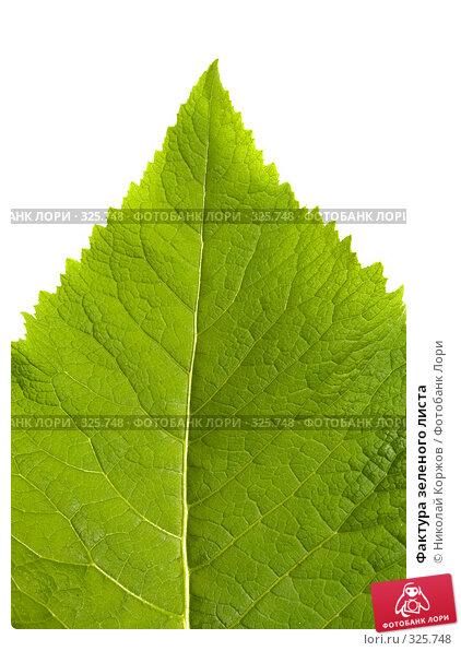 Фактура зеленого листа, фото № 325748, снято 14 июня 2008 г. (c) Николай Коржов / Фотобанк Лори