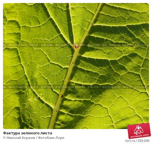 Фактура зеленого листа, фото № 339036, снято 21 июня 2008 г. (c) Николай Коржов / Фотобанк Лори