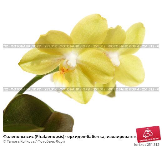 Фаленопспсис (Phalaenopsis) - орхидея-бабочка, изолированное изображение, фото № 251312, снято 14 апреля 2008 г. (c) Tamara Kulikova / Фотобанк Лори
