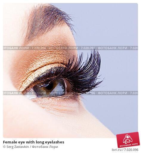 Купить «Female eye with long eyelashes», фото № 7020096, снято 25 января 2015 г. (c) Serg Zastavkin / Фотобанк Лори